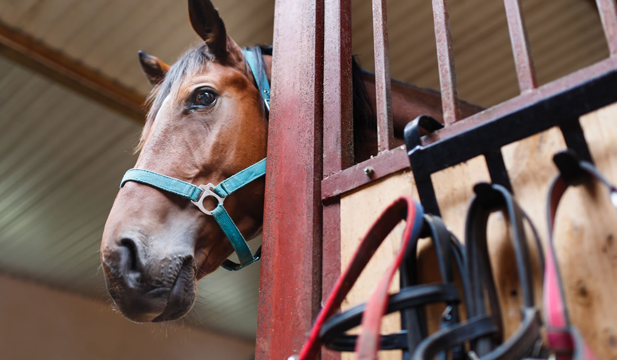 Equine Consultancy Services Featured Image