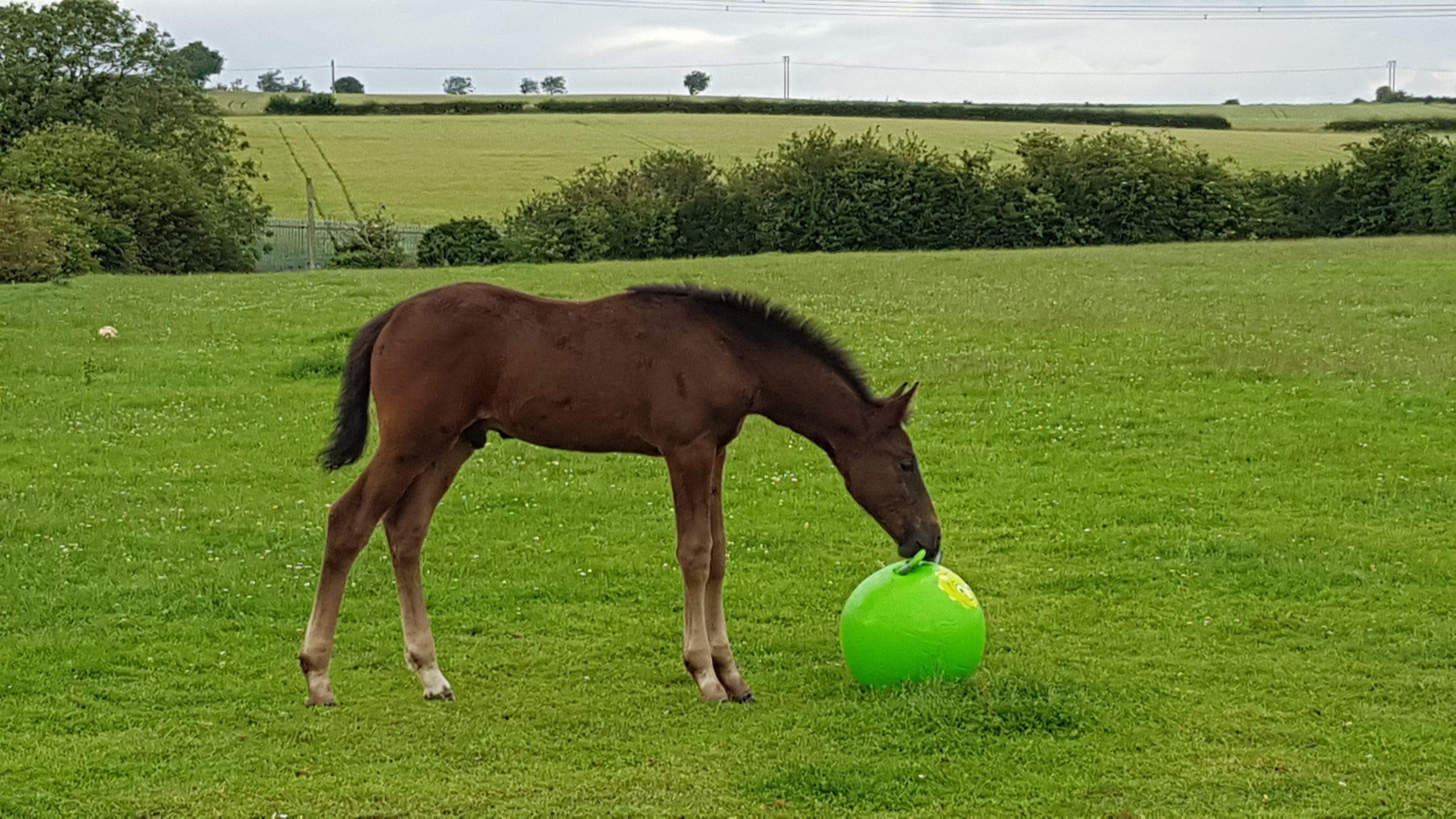 Foal play